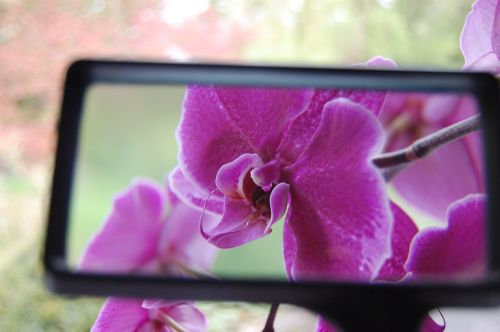 flower seen through magnifying glass